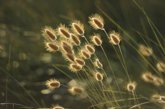 grasses-1939673_1280
