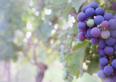 grapes-2180685_640